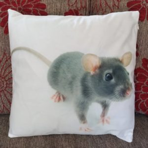 cushion cover rat